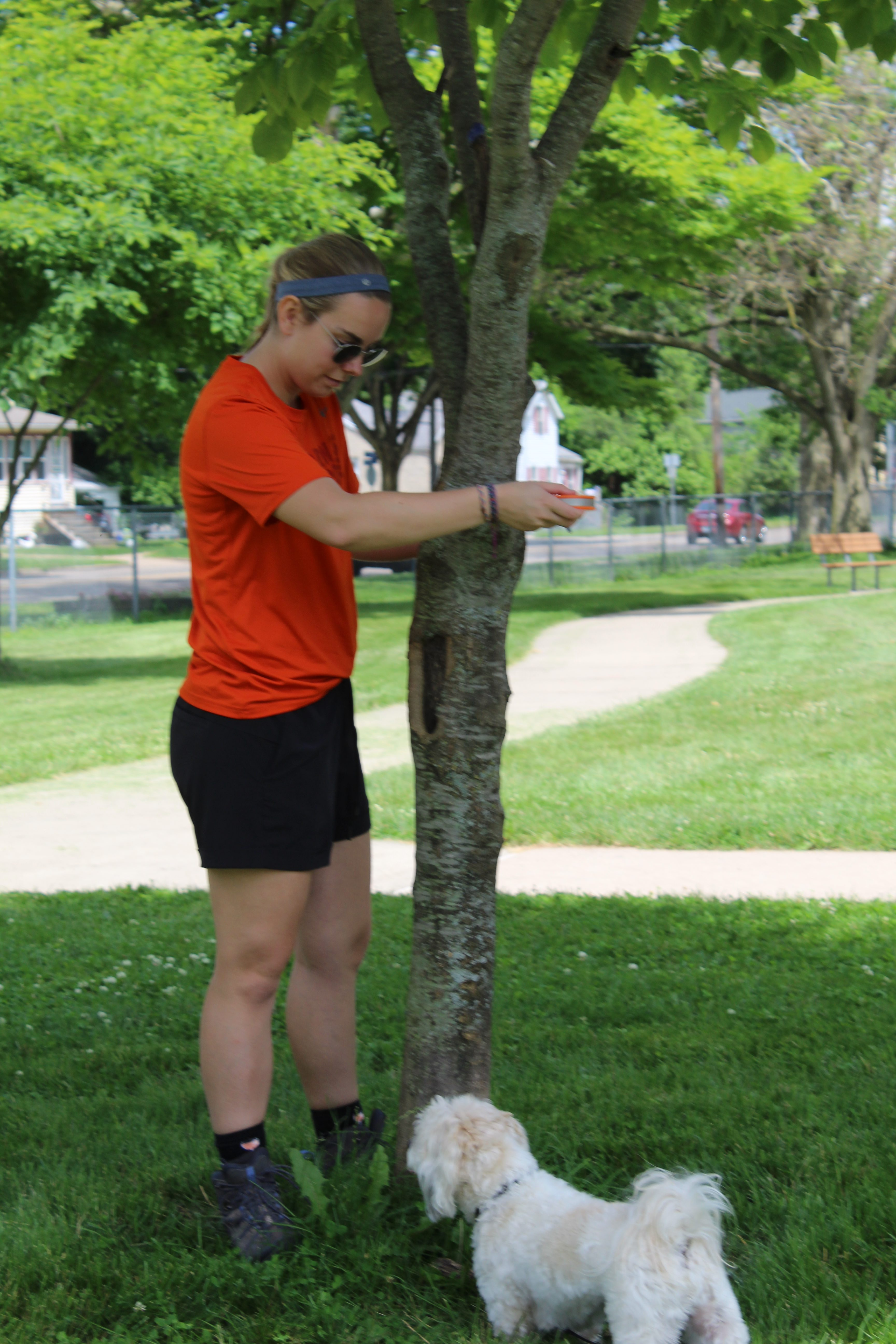 Student measuring tree diameter in a city park
