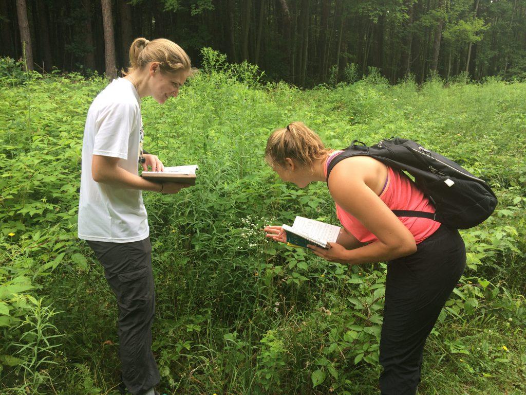 Students surveying plants in the Arboretum