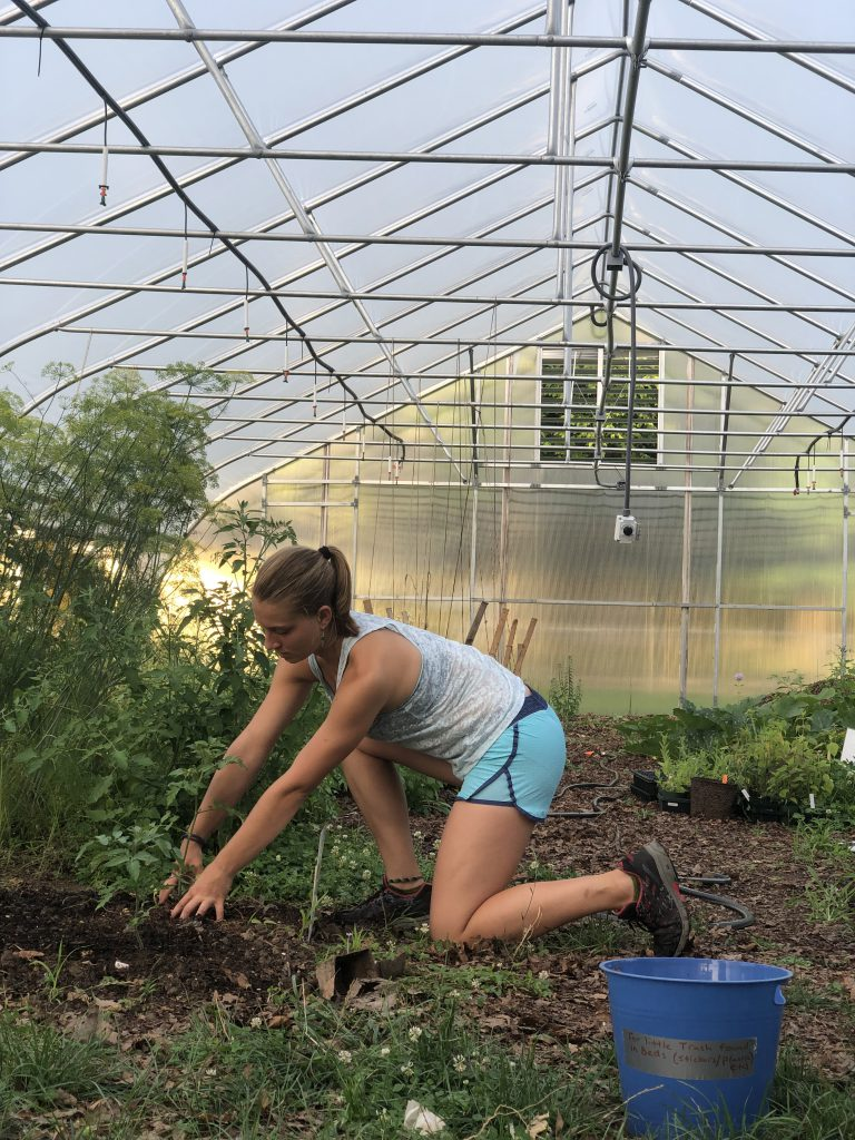 Allie working in the Hoophouse