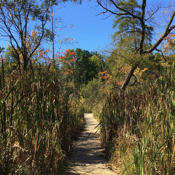 Wetland Boardwalk at the Lillian Anderson Arboretum in late summer